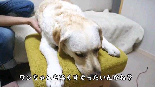 ワンちゃんも~字幕