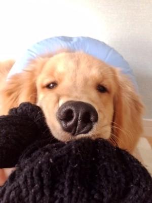 ストレスを感じている犬