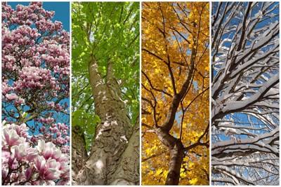 春夏秋冬の木