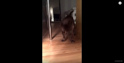 talkingdog4