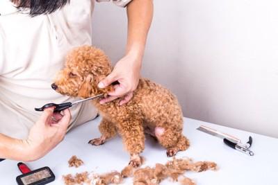 毛玉をカットする犬