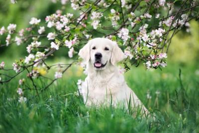 花の木の下にいる犬