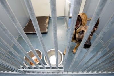保護施設の犬舎の犬