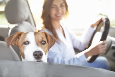 運転席の女性と助手席の犬