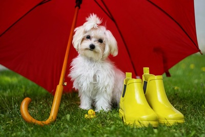 赤い傘を指している犬