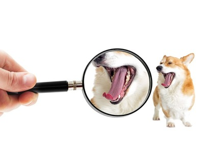 虫眼鏡で犬の歯をチェックしている人