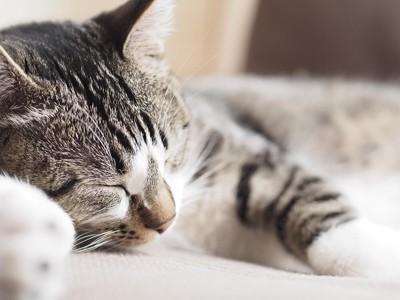 安楽死の依頼を受けた猫