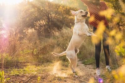 飼い主さんと遊ぶ犬