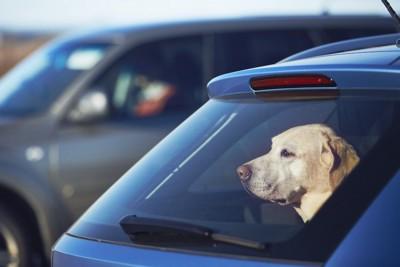 不安そうな表情で車に乗っている犬