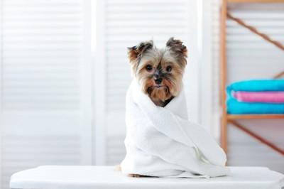 白いタオルに巻かれている犬