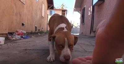 路地に現れた犬