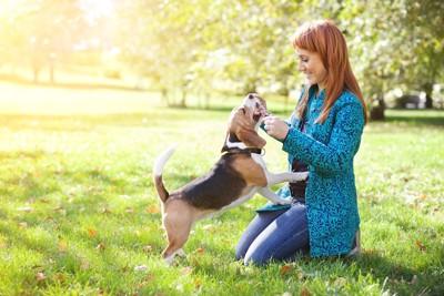 公園で遊ぶ犬と人