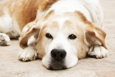 リラックスしている犬