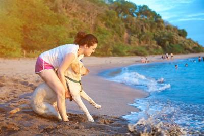 海に入るのが怖い犬