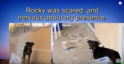 ロッキーの2枚組写真