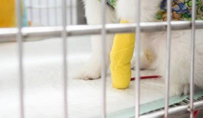 黄色いギプスをつけた犬の手元のアップ