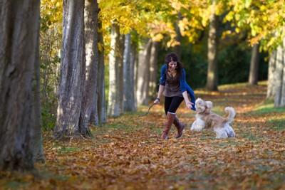 落ち葉の中で飼い主さんと遊ぶ犬