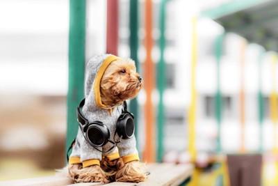 イヤホンをかけている犬の写真
