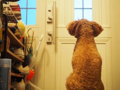 玄関前に座る犬