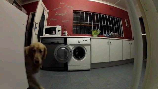 上半身出す犬