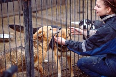 収容されている犬と女性
