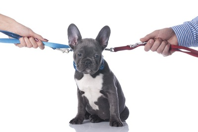 リードを引き合う人間の手と犬