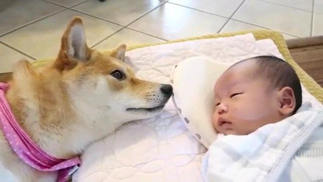 犬の首から上と赤ちゃん