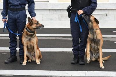 2匹の警察犬とハンドラー