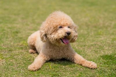 笑顔の子犬