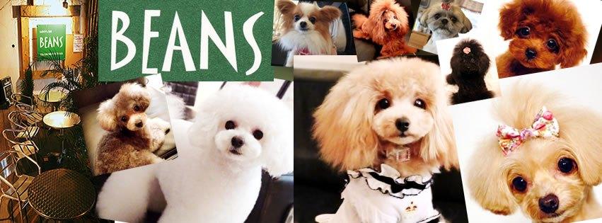 ビーンズ 犬写真
