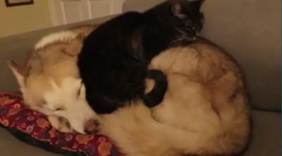 一緒に寝始める猫
