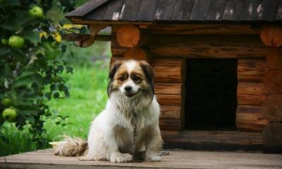 犬小屋の前に座る長毛の犬