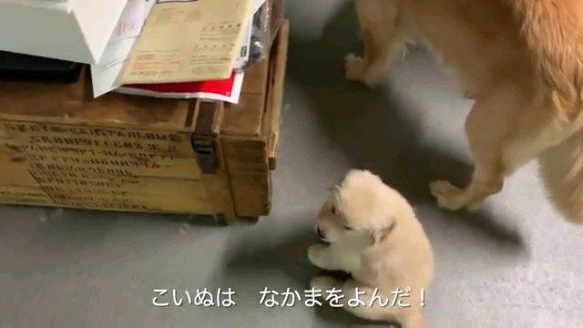 こいぬは~字幕
