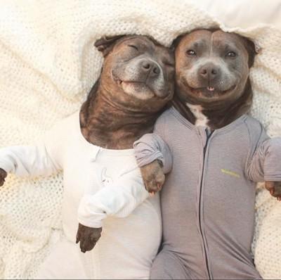 寄り添って寝る犬たち