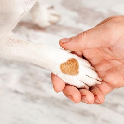 お手をしているハート模様の犬の手