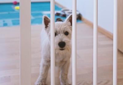 白い柵と白い犬