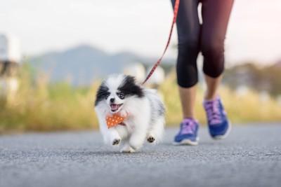 ランニングを楽しむ犬と人