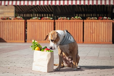紙袋に入った野菜を嗅ぐ犬