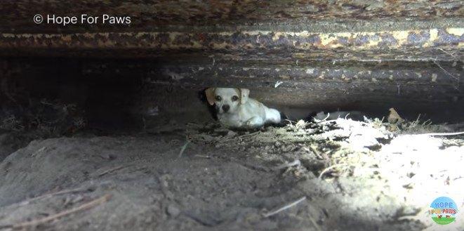 コンテナの下に隠れる犬