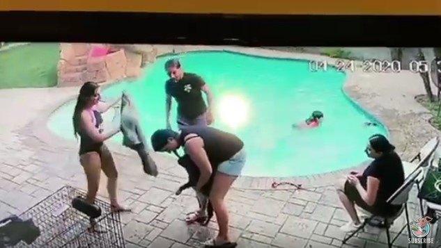 プールサイドで犬の状態を確認