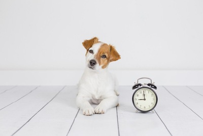 首をかしげる犬と時計