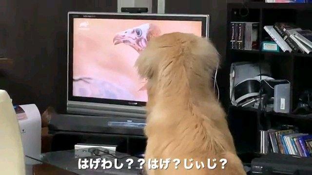 はげわし??~字幕