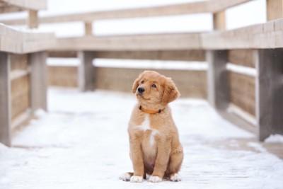雪の上に座って何かを見上げている子犬
