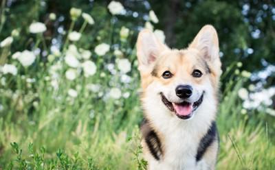 草原の中で笑顔の犬