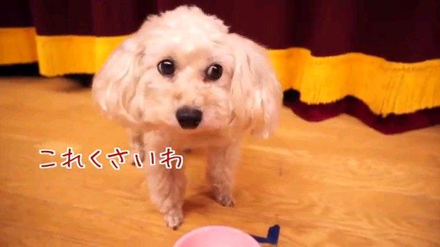 これくさいわ~字幕