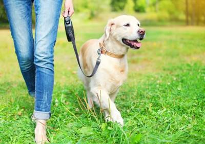 芝生を歩く犬