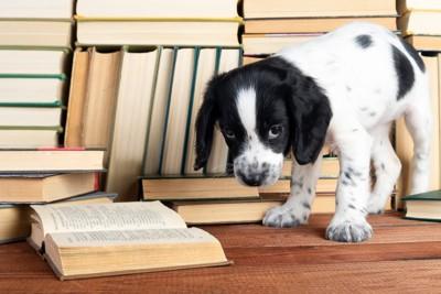 たくさんの本と犬