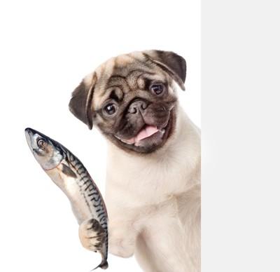 魚を持つ犬