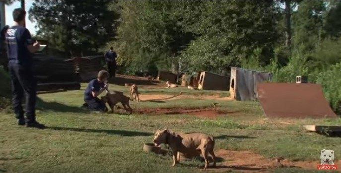 闘犬の違法施設の様子