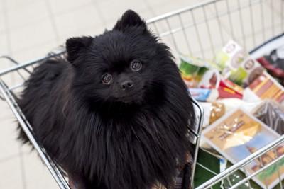 カートに乗っている黒い犬
